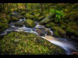 Padley Gorge by Tim MCANDREW