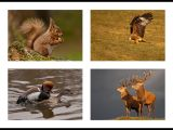 The Reds of GB Wildlife by Ove ALEXANDER CPAGB