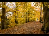 Autumn Walk by Graham Hilton