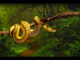 Royal Python 1 (Python Regius) by Terry Hewitt