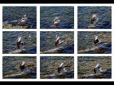 Study of Pelican Landing by Ove Alexander