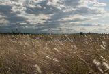 Sun Striking the Field by Ove Alexander