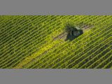 Vineyard with hut by Dave HASTINGS