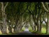 Dark Hedges by Keith Nuttall