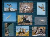 Birds of The Farne Islands by Dave Hastings