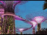 Gardens by the Bay - Singapore by Terry Ottway